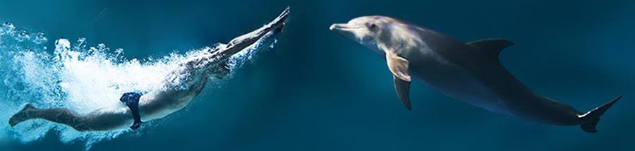 golfinho-e-o-homem-topo