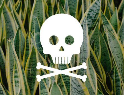 10 plantas perigosas para bichos de estimação