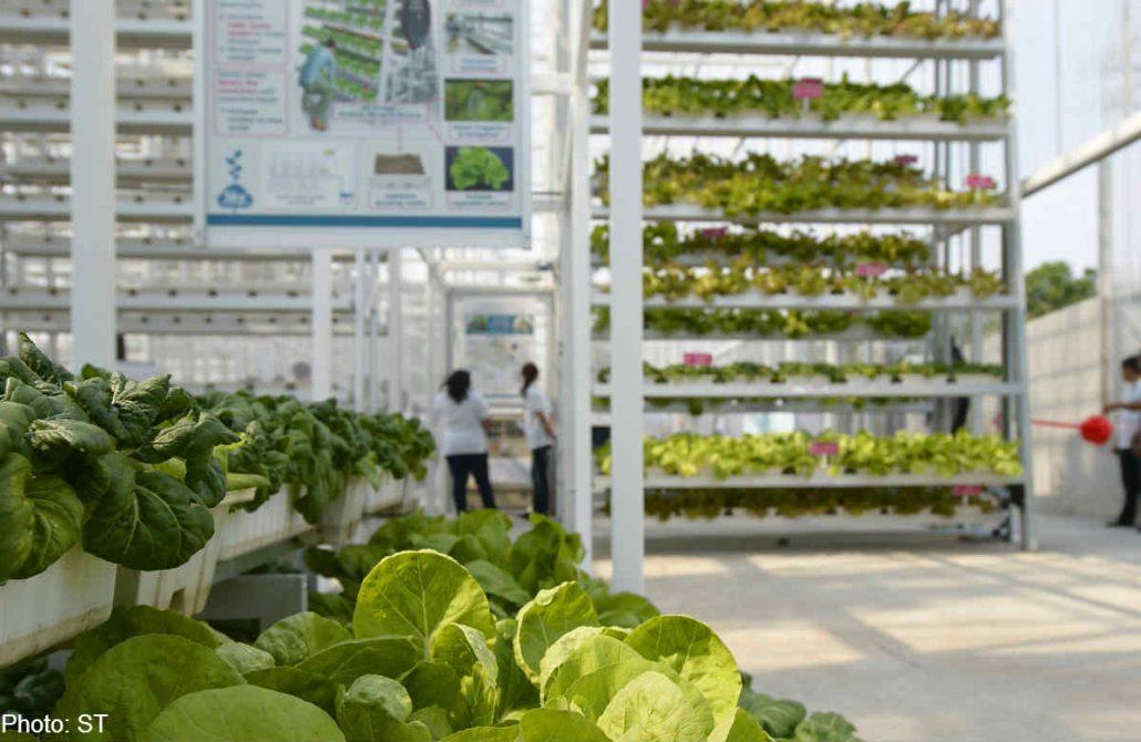 Horta vertical de alta produção